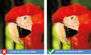 کیفیت مناسب جهت چاپ عکس