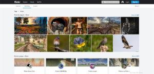 دانلود عکس با کیفیت از فیلیکر